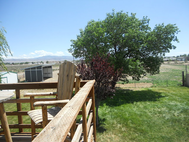 Backyard and pasture