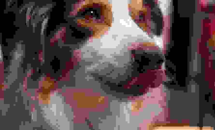 dog-lick.jpg
