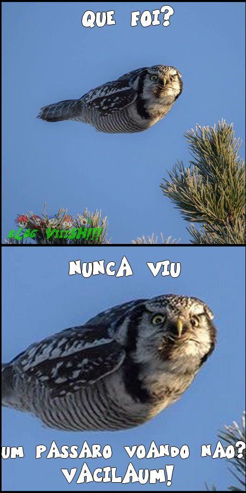 Blog Viiish - Ave que voa sem voar