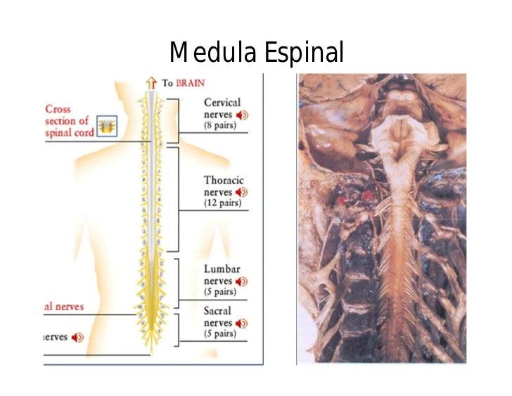 anatomia del cuerpo humano 17 728