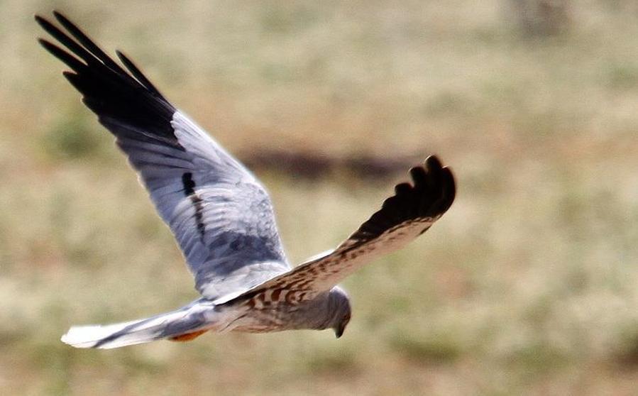 Resultado de imagen para ave