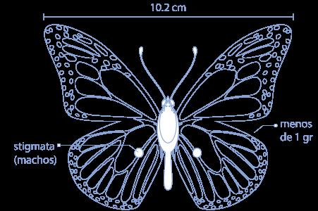 Mariposa Monarca Salvemos A Un Amigo
