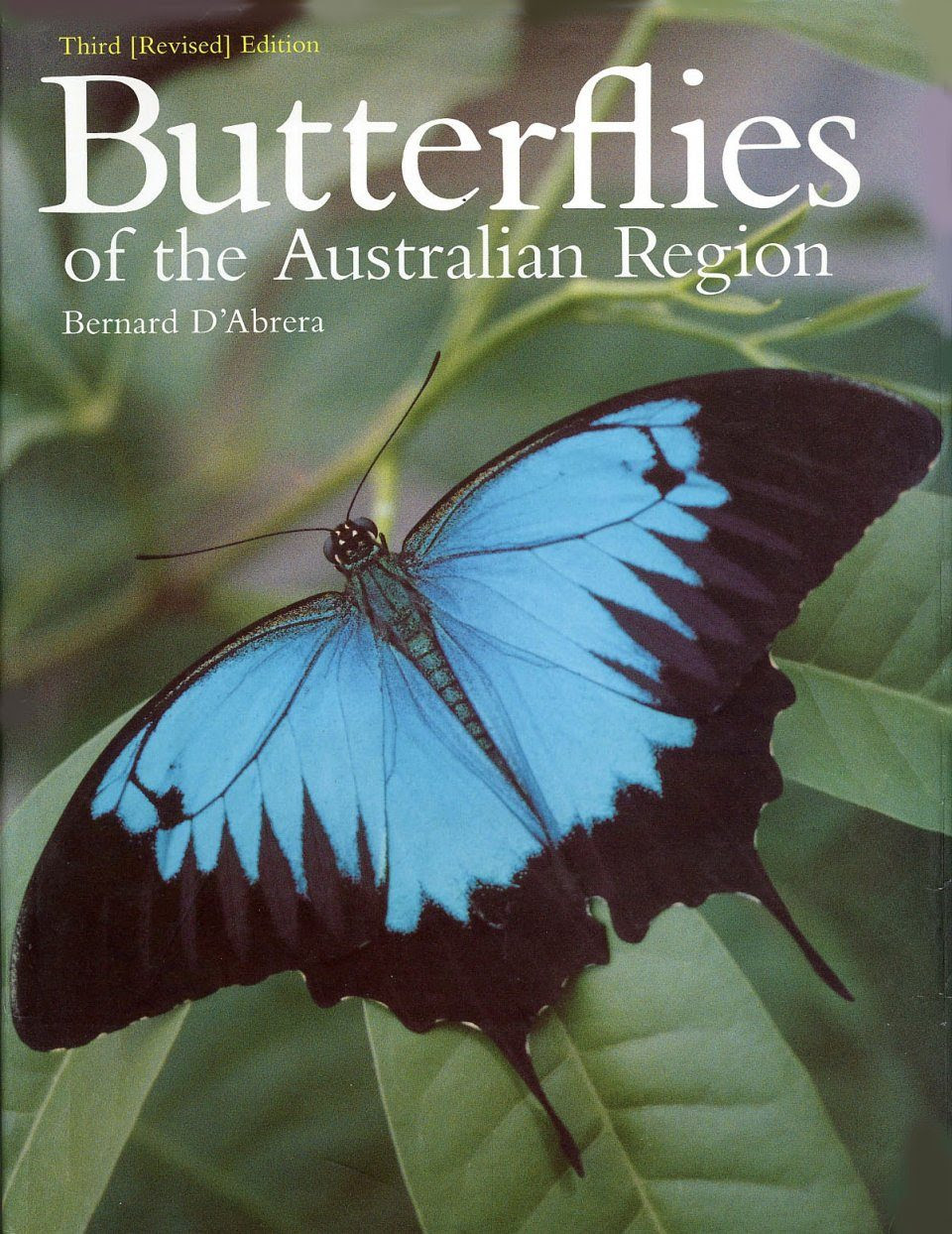 Butterflies Of The Australian Region Butterflies Of The World