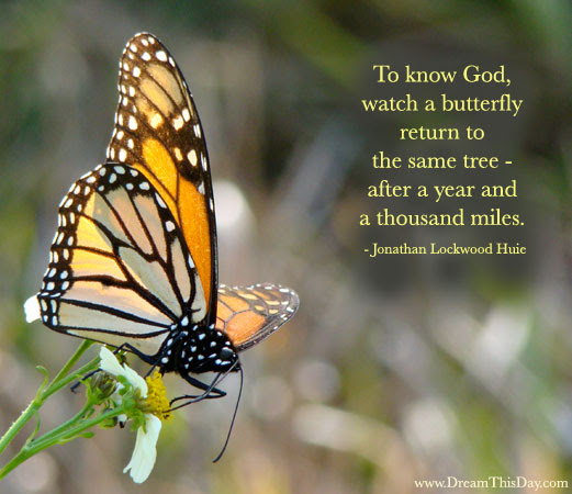 Funny Butterfly Quotes Funny Quotes About Butterfly