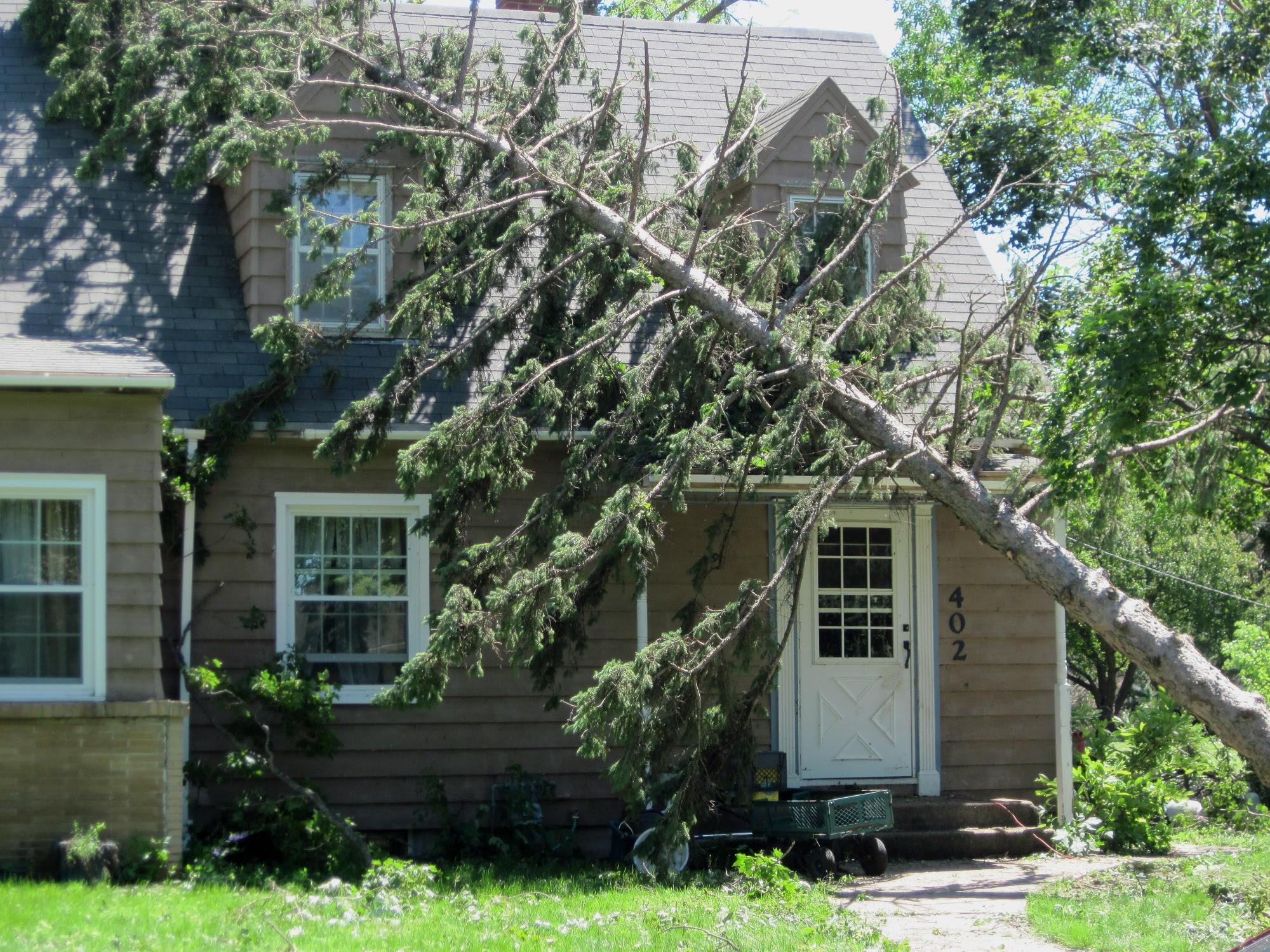Out on a Limb Tree Care LLC
