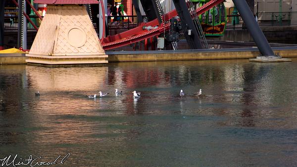 Disneyland Resort, Disney California Adventure, Paradise Pier, Seagull
