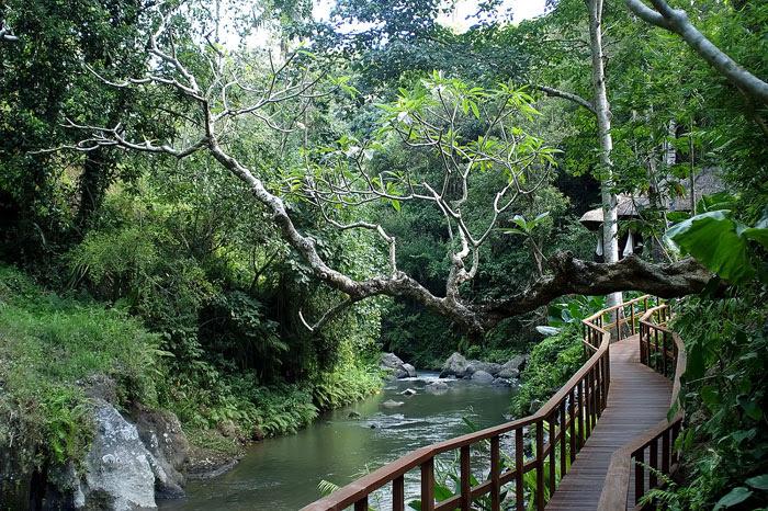 maya ubud river view 2