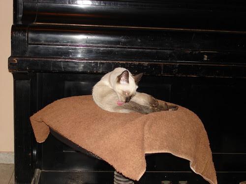 Clean kitten