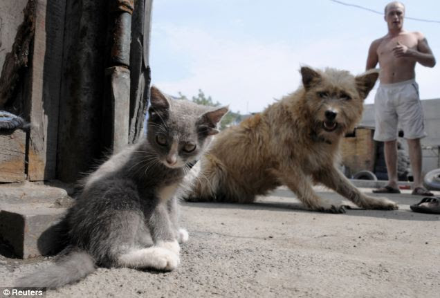 Well that takes the biscuit: A stunned dog catches sight of Luntik, the kitten born with an extra pair of ears