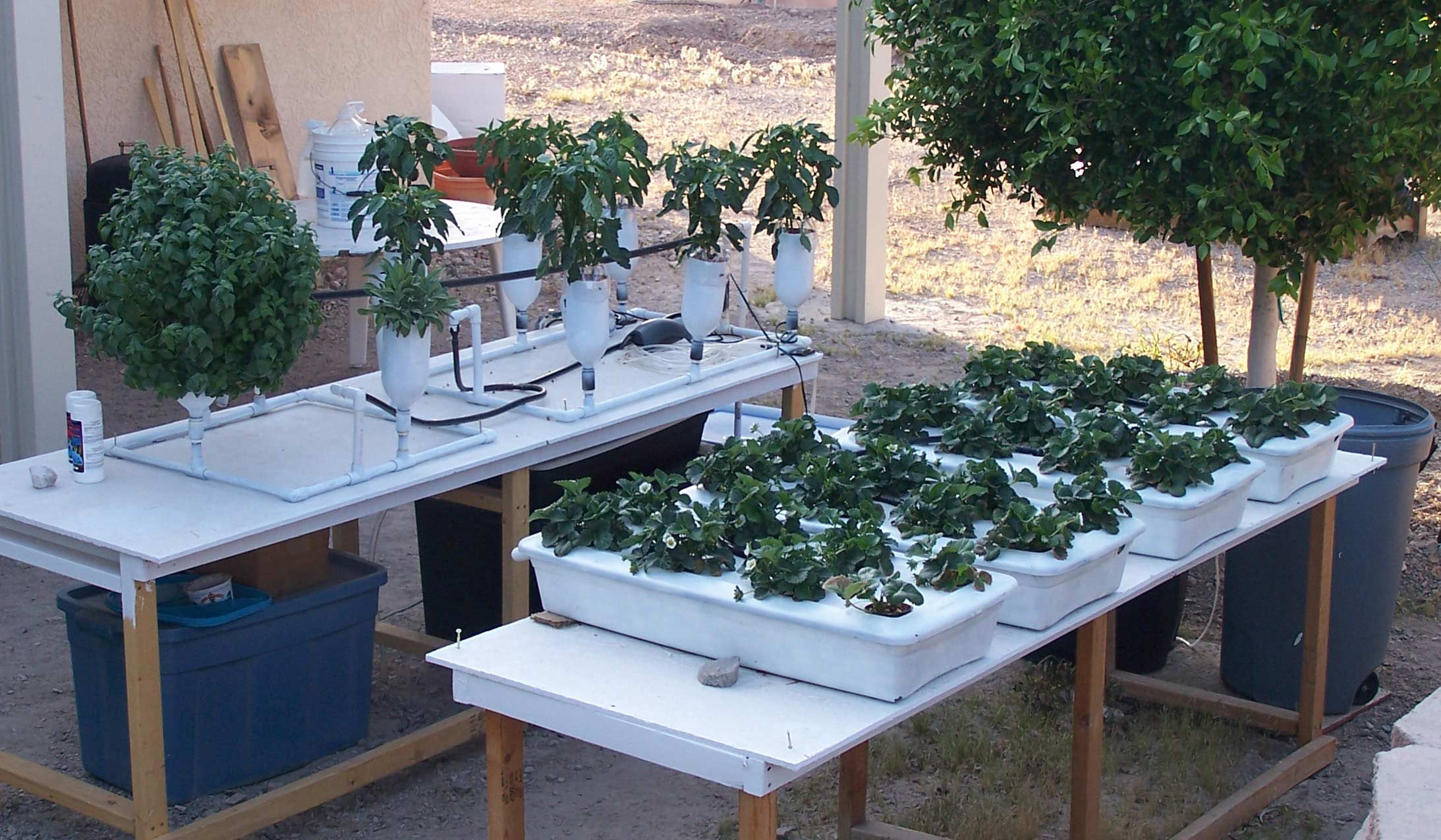Oktober 2017   Aquaponics for You on small garden greenhouse, small greenhouse frame, small greenhouse heating, small greenhouse supplies, small greenhouse plans, small pvc greenhouse, small winter greenhouse, small propagation greenhouse, small hobby greenhouse, small solar greenhouse, small metal greenhouse, small indoor greenhouse, small container greenhouse, small greenhouse foundation, small portable greenhouses, small hoop greenhouse, small plant greenhouse, small farm greenhouse, small cannabis greenhouse, small mushroom greenhouse,