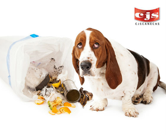 En la basura se encuentran desechos que pueden ser muy perjudiciales para la salud de su mascota.