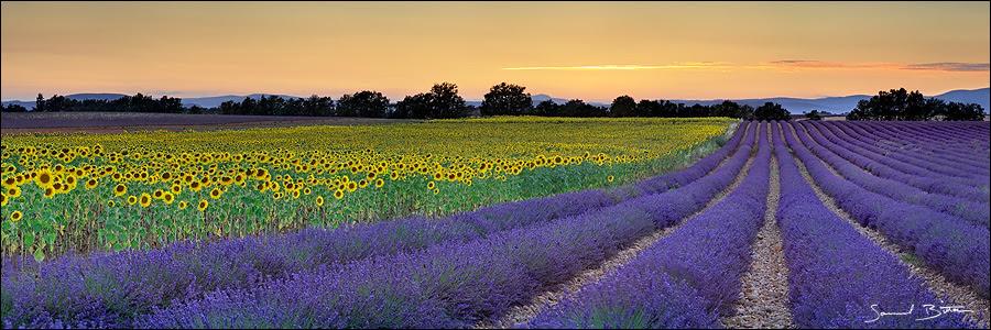 http://fc06.deviantart.net/fs41/f/2009/032/c/d/Lavender_and_Sunflower_by_samuelbitton.jpg