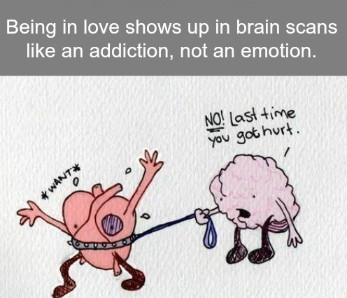 Peaklevel Being In Love Shows Up In Brain Like An Addiction