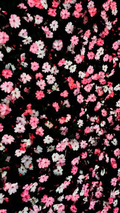 Tumblr Floral Wallpaper Sf Wallpaper