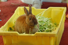Excuse me, waiter, there seems to be a rabbit in my salad