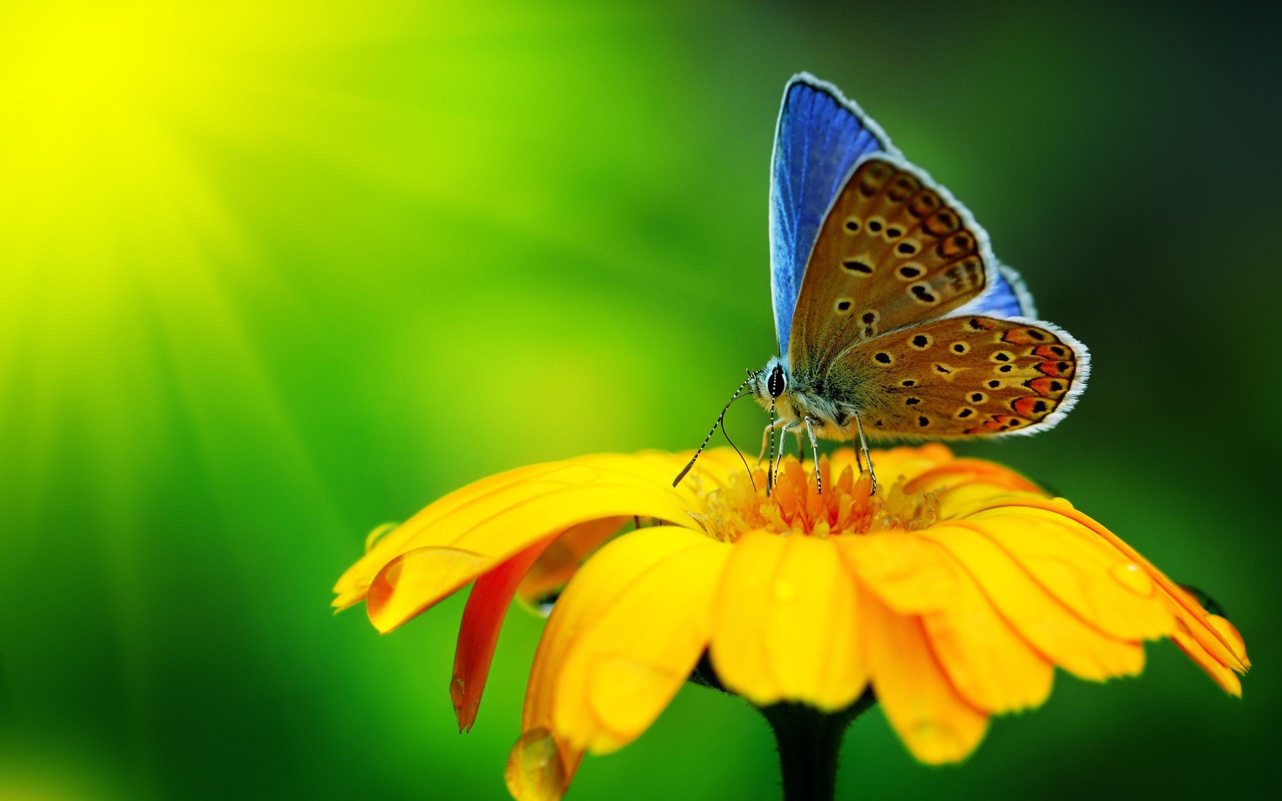 nature, Macro, Flowers, Butterfly Wallpapers HD / Desktop ...