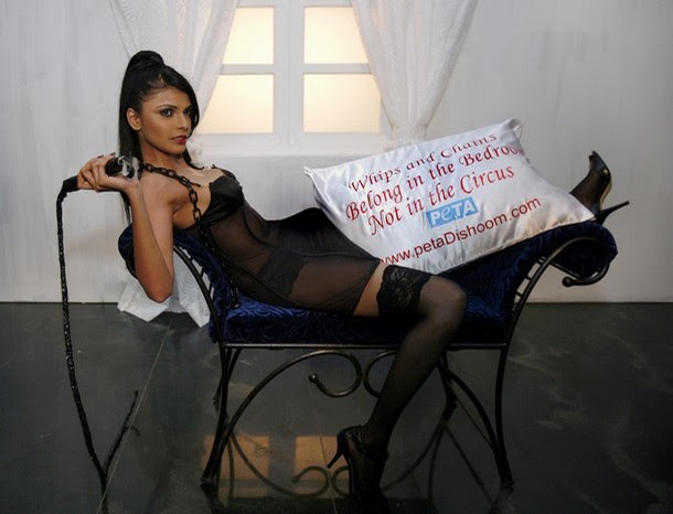 Image result for whips and chains in the bedroom