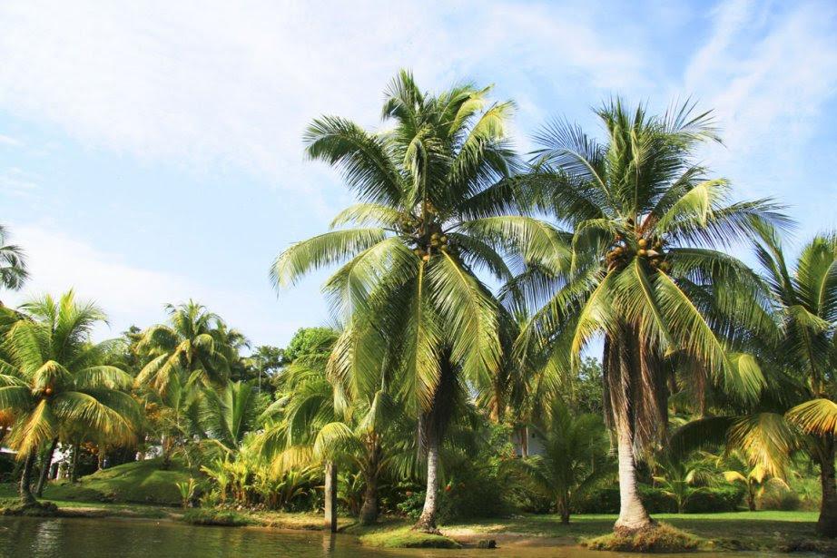 http://images.lpcdn.ca/924x615/201210/17/600282-madagascar-compte-192-especes-palmiers.jpg