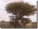 SOMALIA2 155