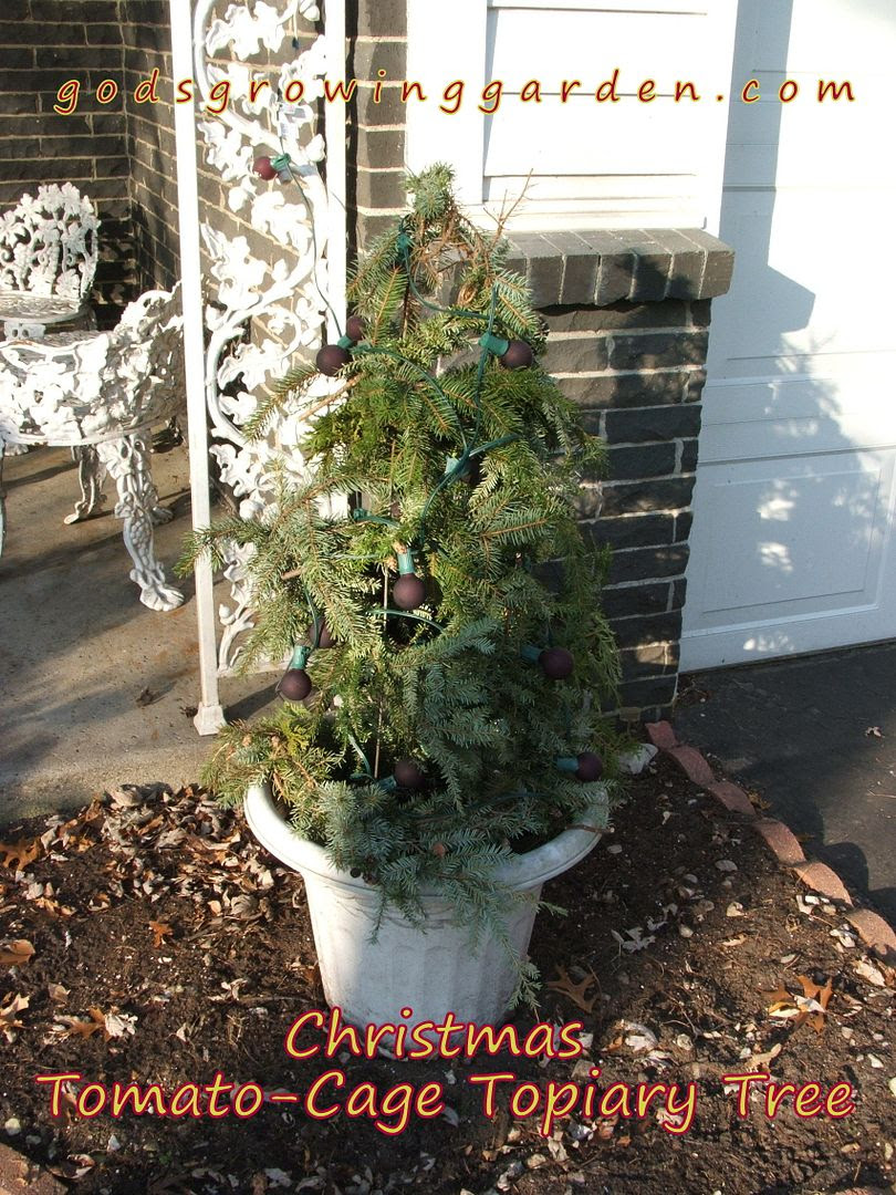 Tomato-Cage Topiary Tree by Angie Ouellette-Tower for godsgrowinggarden.com photo 005_zps4488764e.jpg