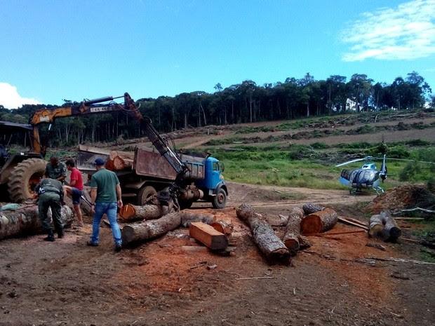 Foram apreendidos 350 metros cúbicos de lenha nativa (Foto: Divulgação/ Polícia Ambiental do Paraná)