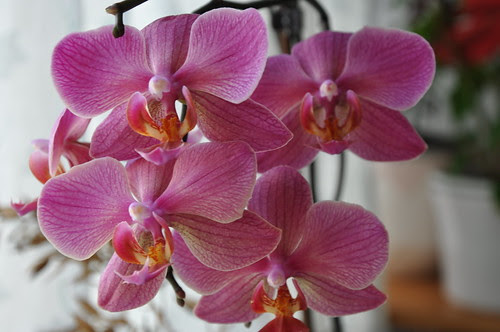 My orchids, my inspiration.