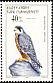Eleonora's Falcon Falco eleonorae