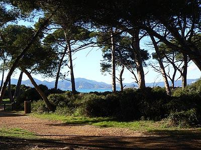 chemin sous les pins 2 .jpg