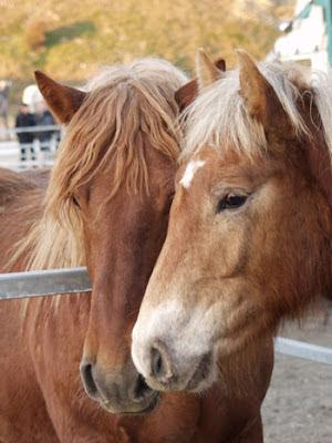 imagen de caballos