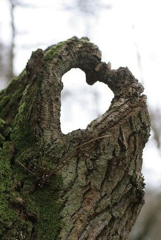 Even trees know the meaning of love... hide a geocache near something this unique and use it as a hint to find cache.