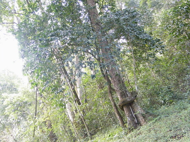 in Periyar Tiger Reserve, Kerala