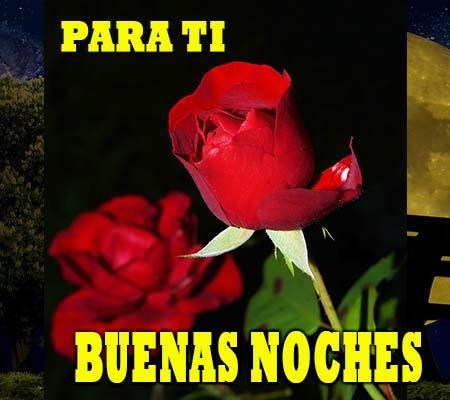 Rosas De Amor De Buenas Noches Rosas De Amor
