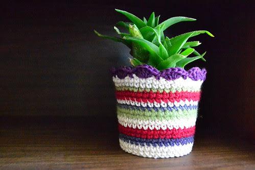 Plant Cozy Again