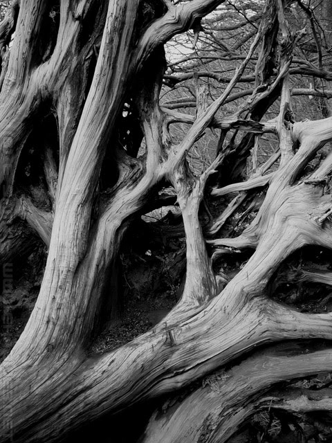 Black And White Tree Branches Photos By Ehab Samyphotos By Ehab Samy