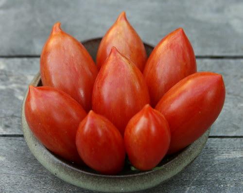 tomato spain