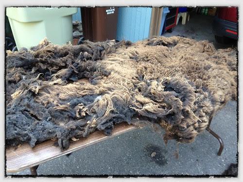 black fleece, skirted