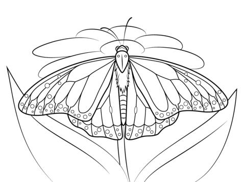 Dibujo De Mariposa Monarca Sobre Una Margarita Para Colorear