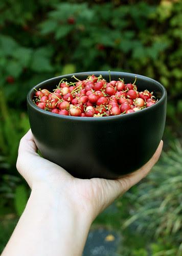 bowl o' ugni