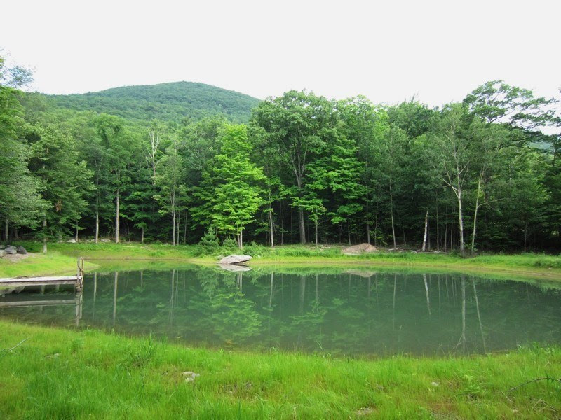 pond01