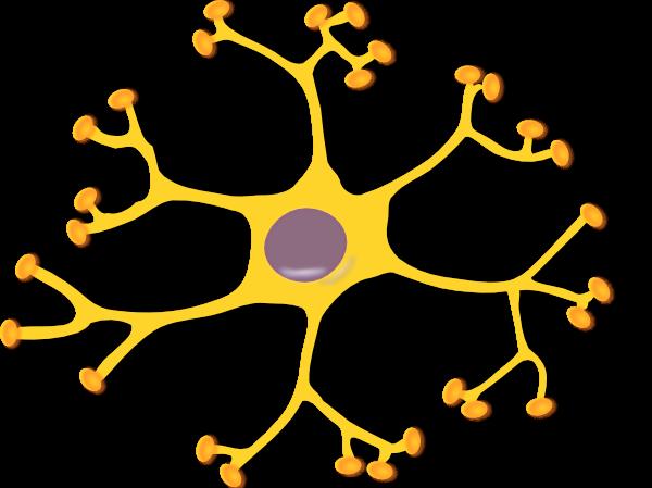 1206565055109646538keikannui_neuron interneuron_2