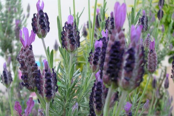 plantas-balcon.jpg