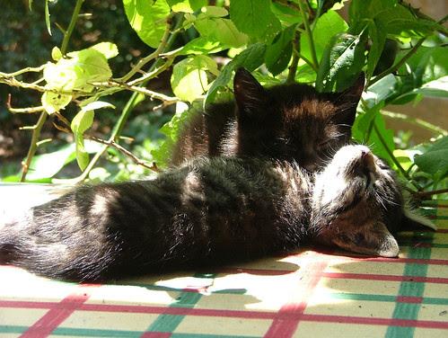 sunbathing or sleeping?2