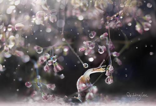 Kiss of spring por twomeows (away...)