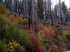 fall colours in yosemite