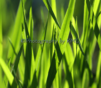 blades of green grass