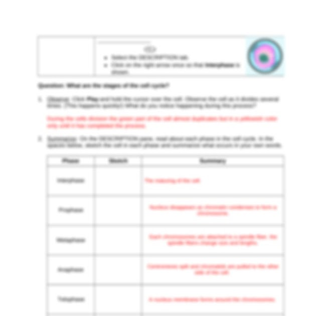 Cell Division Gizmo Answer Key Page 4