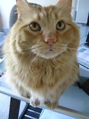 Jasper on the desk