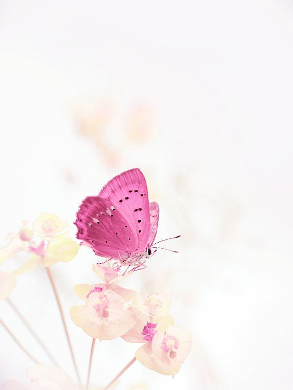 Wallpapers pink butterfly   We Heart It   butterfly, pink ...