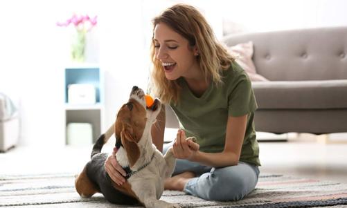 Cómo cuidar la salud de un perro