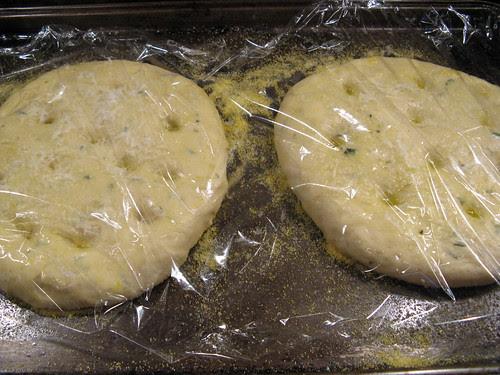 focaccia bread proofing
